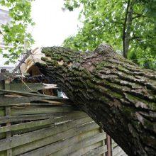 Didelis vėjas pridarė žalos: virtę medžiai apgadino automobilius, namą
