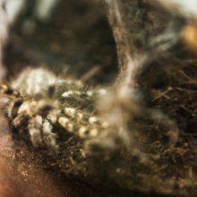 Kas nutinka konfiskuotiems laukiniams gyvūnams?