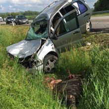 Per susidūrimą su briedžiu apgadinti keturi automobiliai, nukentėjo žmogus