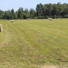 Stygius: palyginti su ankstesniai metais, žolės pievose šiemet gerokai mažiau.