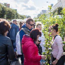 Sodinukų  mugėje – ne tik sodo ir daržo gėrybės, bet ir specialistų konsultacijos