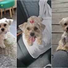 Iš kiemo dingus šuniui – dar vienas akibrokštas: pasirodo, kaimynė jį atidavė nepažįstamam žmogui