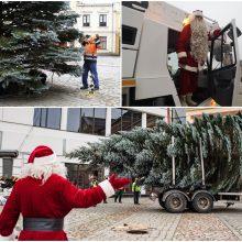 Stebėkite tiesiogiai: Klaipėdos Kalėdų eglutės įžiebimo šventė!