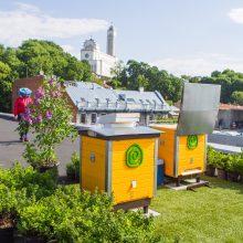 Naujovė Kaune: ant verslo centro stogo apgyvendintos bitės