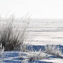 Neringa žiemą stebina grožiu