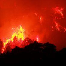 Prancūzijoje 500 ugniagesių kovoja su dideliu miškų gaisru