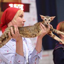 Gyvūnų apsuptyje gyvenanti D. Bielskytė: kiekviena mano diena – atostogos
