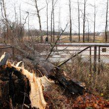 Naktį siautęs stiprus vėjas išvartė daugiau nei 100 medžių, sužalota moteris