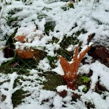 Lietuviai džiaugiasi pirmuoju sniegu: dalijasi žiemiškais vaizdais