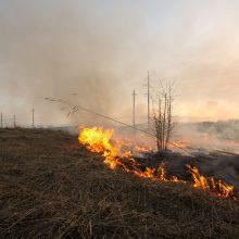 Radviliškio rajone išdegė trys hektarai durpingos pievos