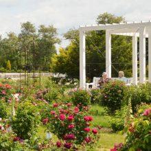 Botanikos sodo rožyne – turininga Kauno senjorų popietė