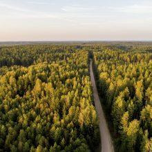 Seime dėl situacijos miškų sektoriuje aiškinsis K. Mažeika