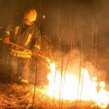 Savaitgalį atvirose teritorijose kilo 186 gaisrai