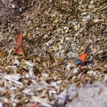 Eišiškių plente užsidegė medienos džiovykloje esančios pjuvenos