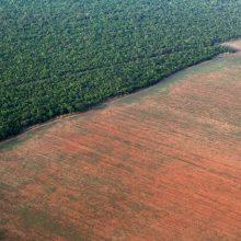Perspėja: Brazilijos Amazonės miškų naikinimas spartėja