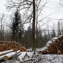 Briuselis perspėjo Lenkiją užtikrinti Belovežo girios apsaugą