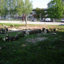 Kauniečius toliau pykdo kertami medžiai: atvažiuoja kirsti be įspėjamųjų ženklų
