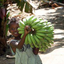 Ar pasirengę dienai, kai nebeliks bananų?
