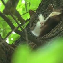 Katinas nelipa iš medžio jau šešerius metus