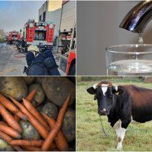 Alytiškiams – rekomendacijos dėl vandens ir maisto vartojimo, gyvulių laikymo