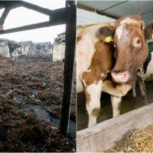 Alytaus rajono ūkininkams ir įstaigoms – daugiau nei 58 tūkst. eurų kompensacijos