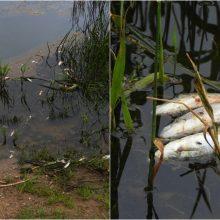 Galima tarša Nemune: paskelbti naujausi vandens tyrimų rezultatai