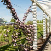 Botanikos sode vanile kvepia raganės