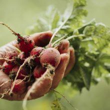 Lietingas ir šaltas pavasaris stabdo ūkininkų darbus, lėtina daržovių augimą