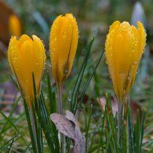 Orai: balandžio startas bus niūrus ir šlapias