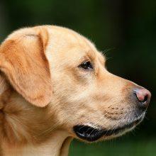 Muitinė siekia užkirsti kelią nelegaliai gyvūnų prekybai