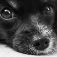 Dėl Kretingos rajone pakarto šuns policija pradėjo ikiteisminį tyrimą