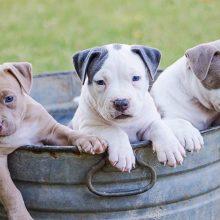Žiauru: Alytaus rajone rasti du negyvi, įtariama, nunuodyti šuniukai