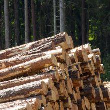 Šiemet nustatyta 70 neteisėtų miško kirtimo atvejų, nubausta beveik 180 žmonių