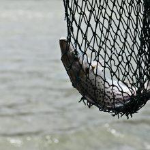Aiškinsis dėl žvejų tinklų žalos gamtai