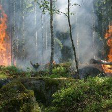 Lietuvoje vyrauja didelis miškų gaisringumas