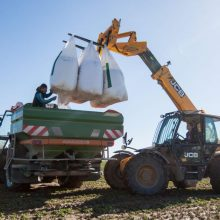 Pakaunės ūkininkai neskuba džiaugtis žiemkenčiais