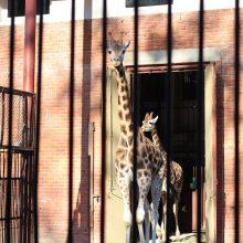 Naujų mokslo metų pradžią galima atšvęsti ir Kauno zoologijos sode