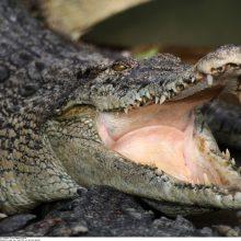 Floridos pramogų komplekse aligatorius nusitempė dvejų metų vaiką