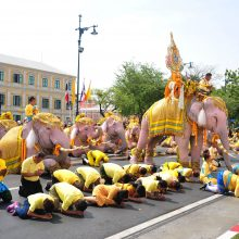 Naujajam Tailando karaliui pagarbą atidavė atsiklaupę drambliai