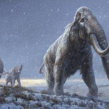 Mamutų tyrėjai iššifravo seniausių pasaulyje žinomų DNR pavyzdžių sekas