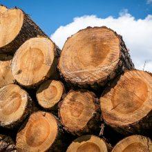 S. Gentvilas: Į Lietuvą importuojama baltarusiška mediena gali būti radioaktyvi