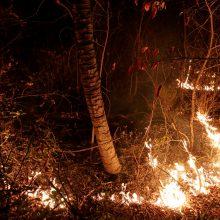 Su Amazonijos miškų gaisrais kovojanti Brazilija 60 dienų uždraudė deginti