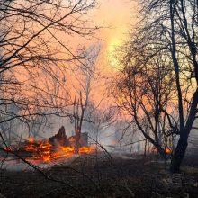 Černobylio zonoje intensyvėja miško gaisras