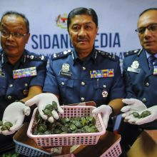 Malaizijos oro uoste dviejų keleivių lagaminuose aptikta per 5 tūkst. vėžlių