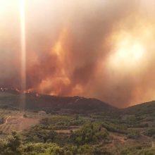 Sirijoje ir Libane siautėjančiuose miškų gaisruose žuvo du žmonės