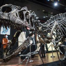 Aukcione Paryžiuje už 3 mln. eurų parduotas dinozauro skeletas
