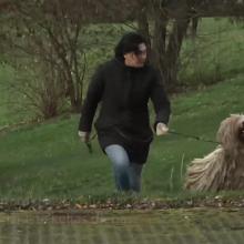 Kaune gyvena garsiausias šuo