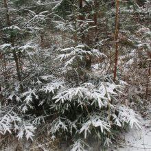 Pavasarį tebejaukia arktinis oras