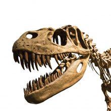 Dinozaurai irgi sirgdavo vėžiu, nustatė mokslininkai