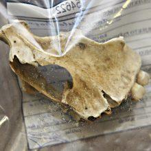 Gargžduose, upėje, rastas galimai žmogaus žandikaulio kaulas